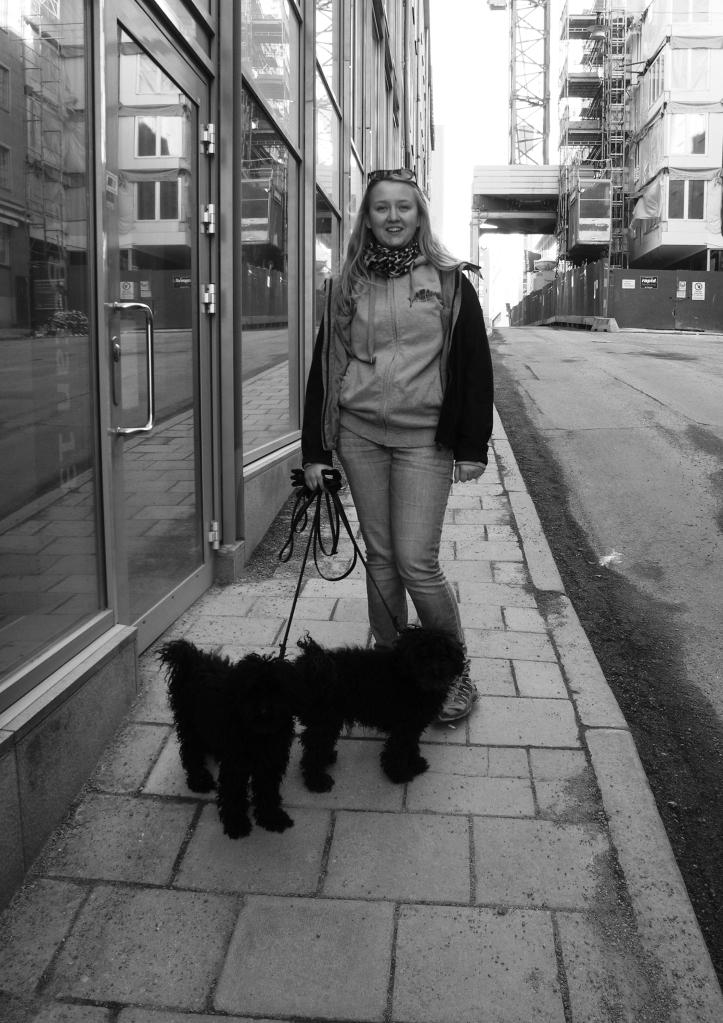Söndagspromenad i Stockholm med två dvärgpudlar